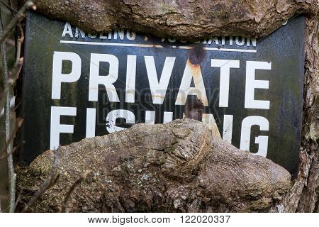 No fishing sign with tree growing around it. An old metal sign stating private fishing has been engulfed by the growth of the tree still showing its message