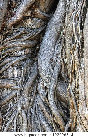 Abstract Image of a Gnarled Tree Trunk