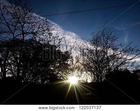 El sol desaparece dejando apreciar su belleza detrás de los árboles