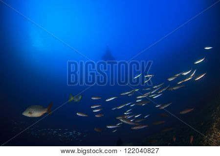 Ocean underwater scene with fish and manta ray on coral reef