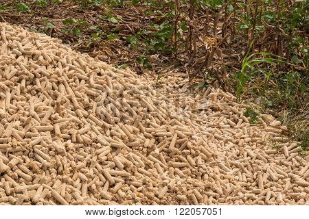 Pile dry corn cobs after harvesting Thailand.