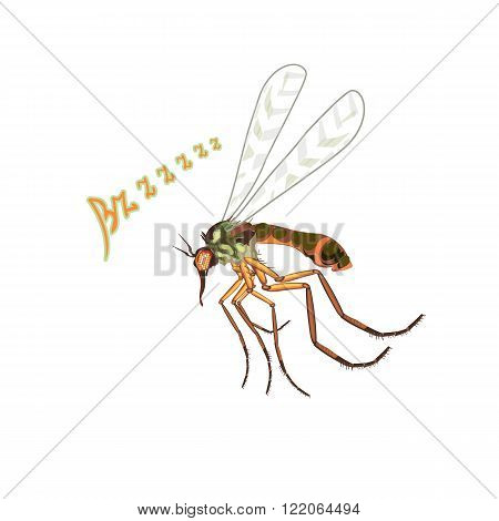 The mosquito flies suck blood. Blood-sucking insects mosquitoes buzzing the sound bzzzz flap its wings. The big bad mosquito. Bright colors with fine details realistic art illustration in vector