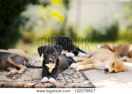 picture of a Cute puppes sleeping. Animal theme
