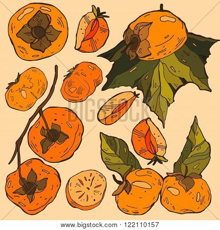 Persimmon Isolated Persimmon Vector. Composition of Persimmon on beige background. Persimmon icon fruit set. Fruit Composition for Packaging Juice Yogurt and other design elements for labels badges banner flyer business card poster