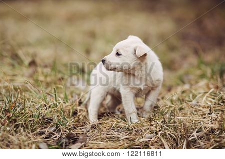 Cute white roofless puppy standing on the tree in field