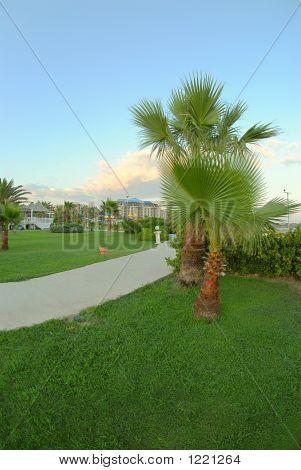 Walk With Palms