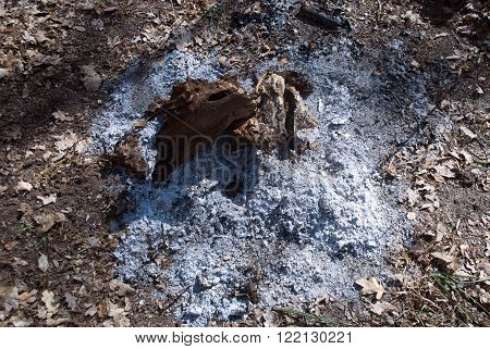 burned tree root around the root ash
