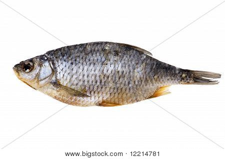 object on white - food dry fish close up poster