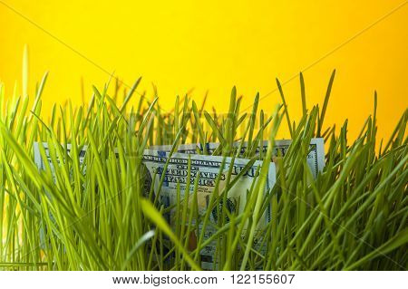 Dollars in green grass. Money growth. Financial concept.
