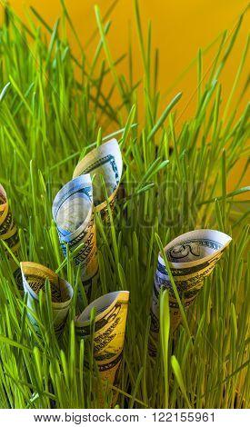 Dollar bills in green grass. Financial concept.