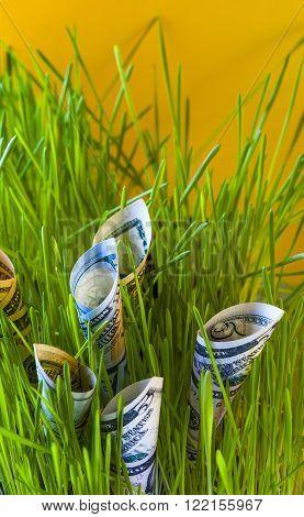 Money growth: dollars among green grass. Financial concept.