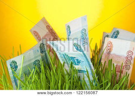 Russian ruble bills among green grass. Money growth. Financial concept.