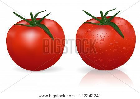 Tomato and tomato with water drops. Vector illustration isolated on white background