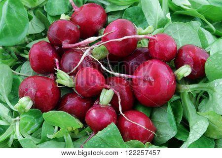 red wet radish on a green salad