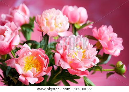 beautiful bouquet of pink peony