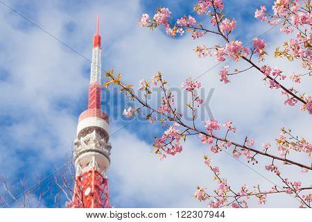 Pink Sakura foreground and Tokyo tower is background