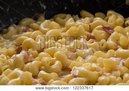 Macaroni And Cheese Close-up