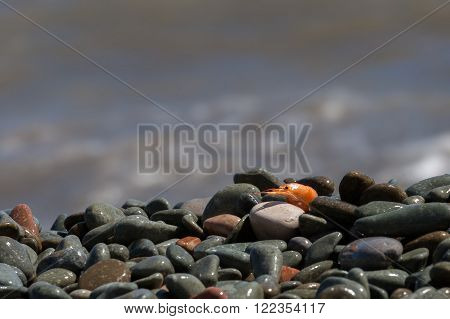 boiled shrimp on pebble by the sea in clear summer day