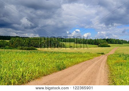 Countriside road through fields and hills under cloudy blue sky. Corn plants are weak due to cold climate and shor summer and are used as furage to feed cattle.