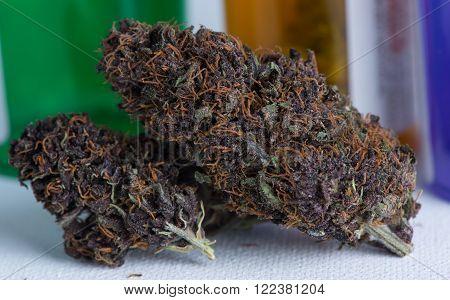 Blackberry Afgoo Medicinal Medical Marijuana close up macro of deep purple leaves and orange hairs.