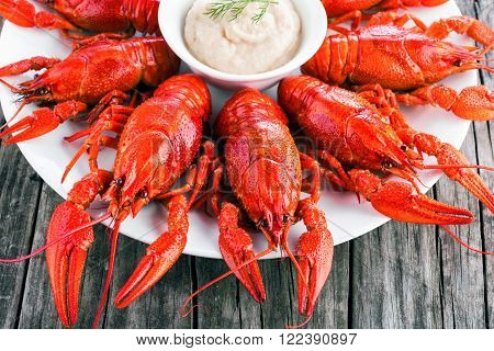 Boiled red crayfish with horseradish cream close-up