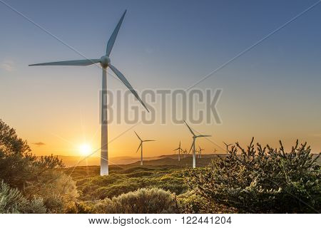 Renewable wind energy with many large windmills at sunset on a coastline.