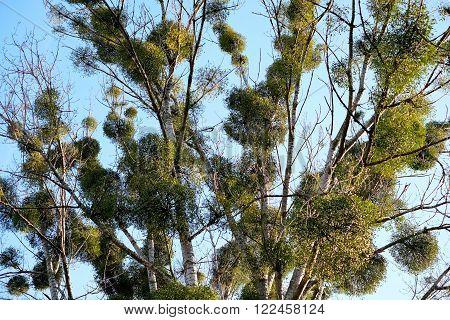Parasites On The Tree