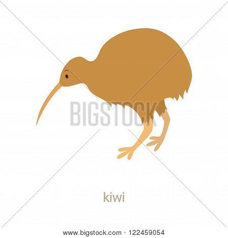 Kiwi bird. Cartoon character. Apteryx. Zoo illustration. The fauna of the Australian  and New Zealend continent. Wild animal. Cute kiwi. Flat fanny bird