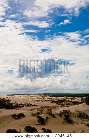 Sand dunes and bushes on Curonian Spit