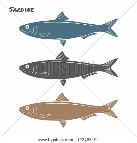 Sardine fish vector illustration on white background