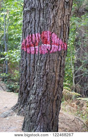 KORTEZUBI, SPAIN - OCTOBER 19, 2014: Pips painted on trunks in the Oma forest, by Agustin Ibarrola, in Kortezubi, Spain on Oct 19, 2014