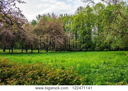 lawn in the shade of fruit trees of green fruit garden in spring