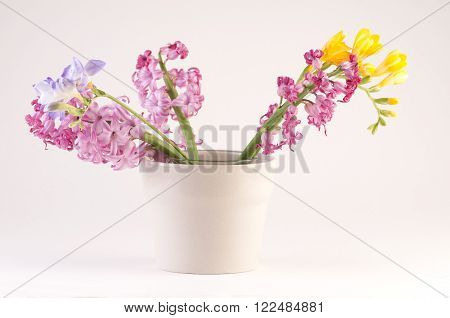 Spring flowers in vases. Fresia and Hyacinth blossom