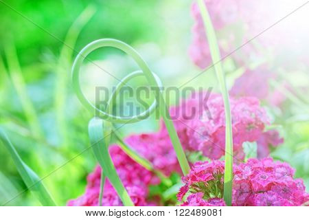 Beauty summer floral still life in green and lilla