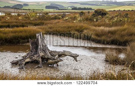 Landscape In The Catlins New Zealand