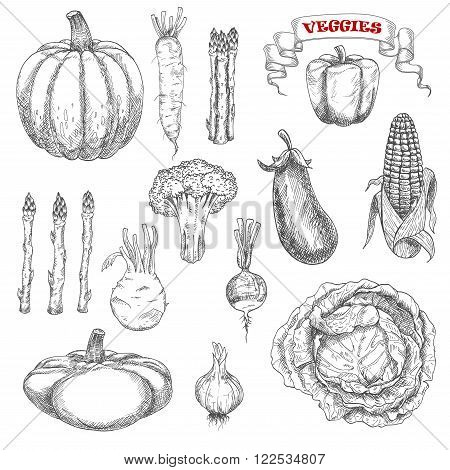 Old fashioned sketches of ripe autumnal vegetables with cabbage and pumpkin, eggplant and corn, bell pepper and asparagus, broccoli and garlic, daikon and kohlrabi, pattypan squash and radish