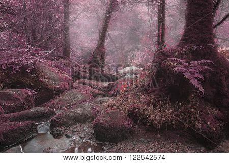 Beautiful surreal alternate color forest landscape image