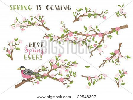 Blossoms leaves and bird on tree branches. Hand-written brush lettering. Best spring ever! Spring is coming.
