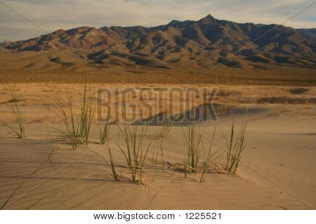 Life In The Mojave