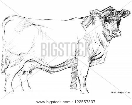 Cow. Cow sketch. Dairy cow pencil sketch. Animal farm. Milking Cow Breed