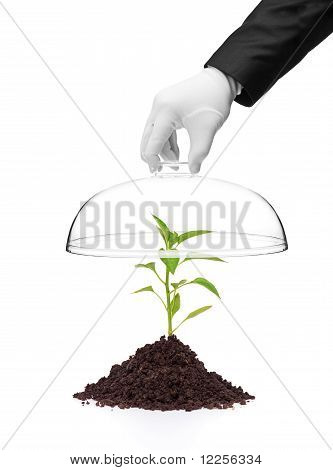 A Hand Holding A Cover Over A Pepper Plant In Soil