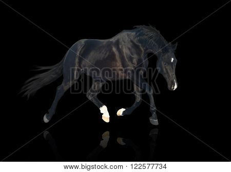 isolate of the black horse trotting on the black background