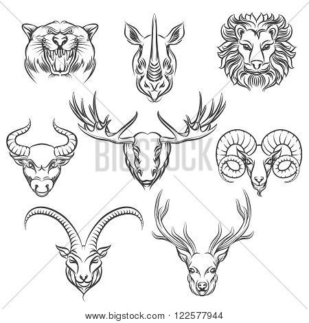 Wild animals heads, hand drawn icons. Rhino and leopard, bull and deer, lion and ram heads. Vector illustration