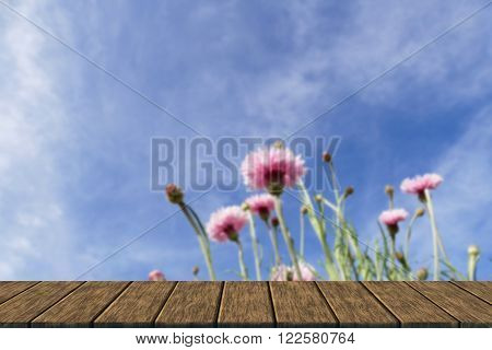 Pink Cornflower With Blue Sky Background