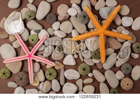 background with colorful seashells pebbles and starfish