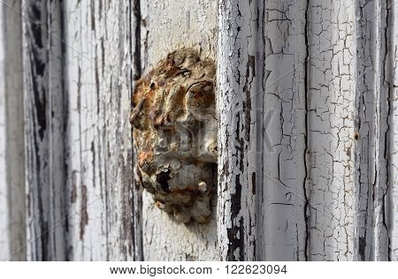 A rusty lion head door emblem on a peeling white door
