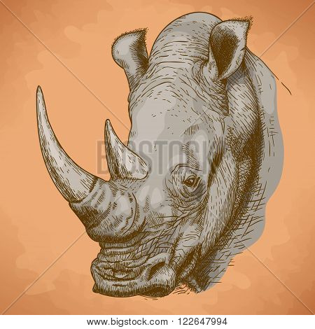 Vector engraving antique illustration of rhinoceros head in retro style