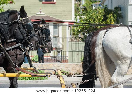 First and second horse teams for the stagecoach.