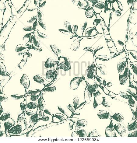 Hand drawn jade plant seamless pattern