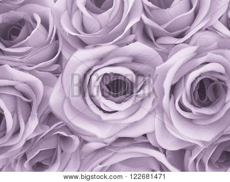 Close up beauty rose pattern background monotone color filter effect